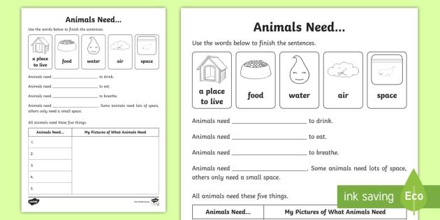 Animals Need Worksheet   Activity Sheet