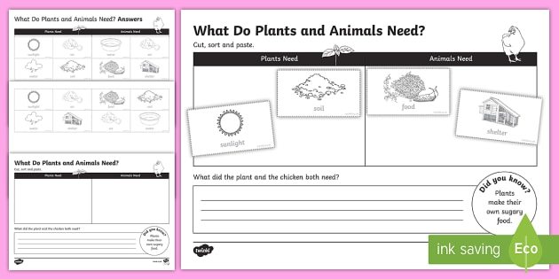 Plants And Animals Needs Worksheet   Activity Sheet