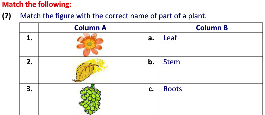 Online Evs Practice Worksheets Types Of Plants Worksheets For