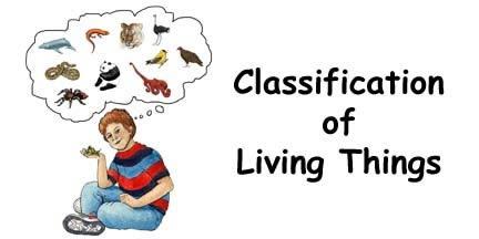 Classification Unit