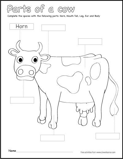 Cows Sheet