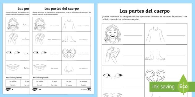 Las Partes Del Cuerpo My Body Parts Worksheet   Activity Sheet