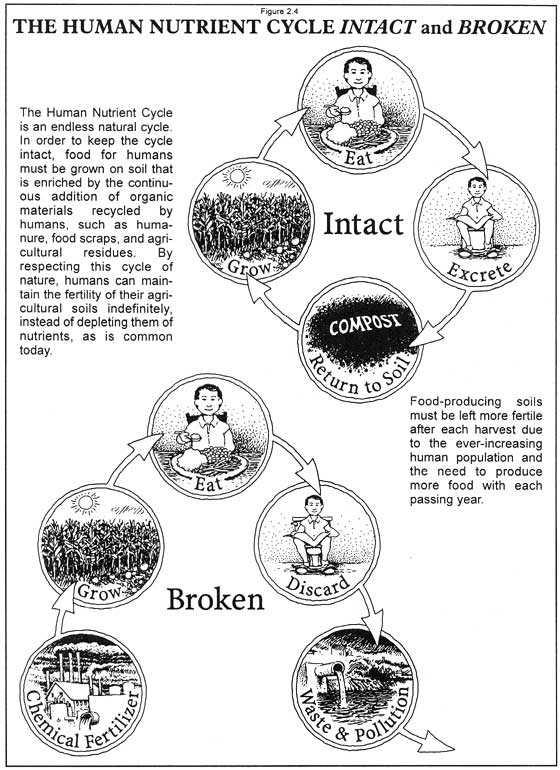 02_01 Human Nutrient Cycle