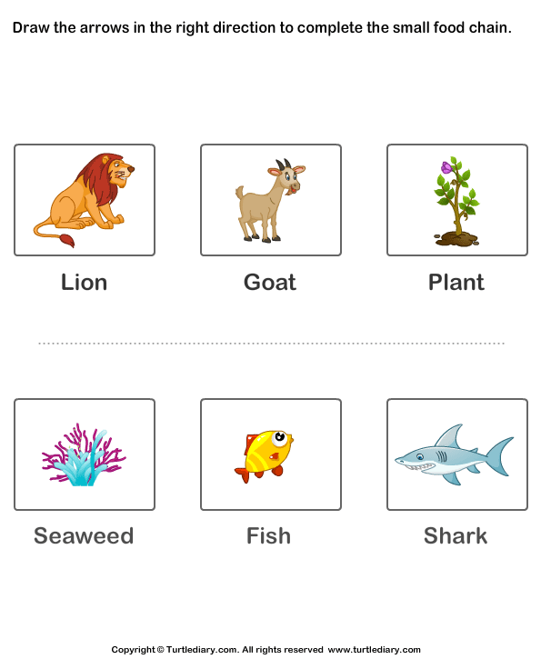 Food Chains For Kids Worksheet