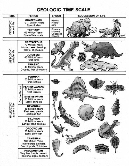 Geologic Column – Creation Today