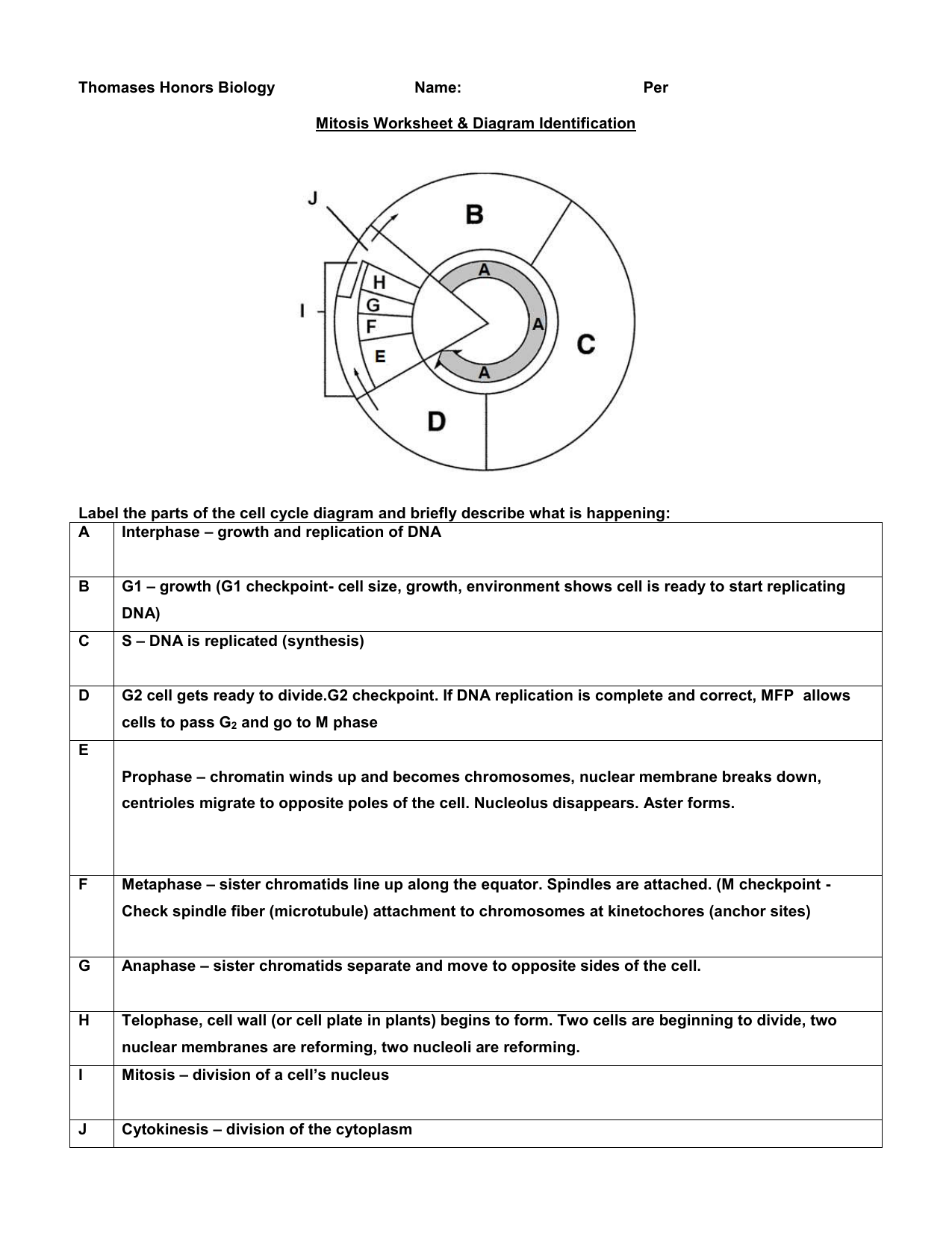 Mitosis Worksheet Answers Sw Science 10