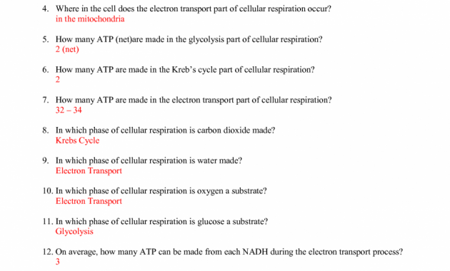 Cell Cycle Labeling Worksheet Key