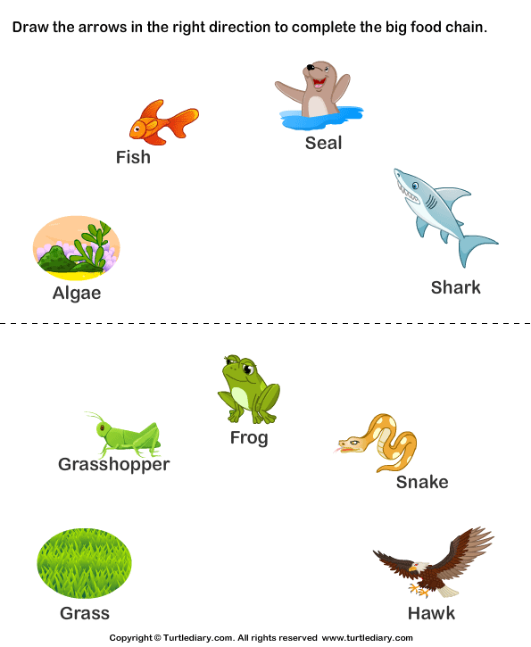Science Food Chain Worksheets Worksheet