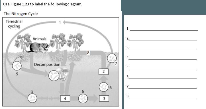 Snc1d Nutrient Cycle Worksheet Name  ______