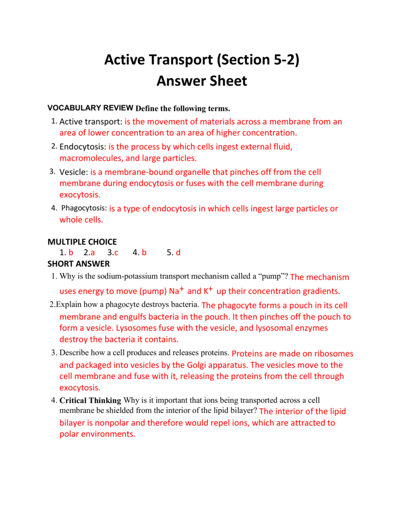 Active Transport Worksheet Answers Choice Image
