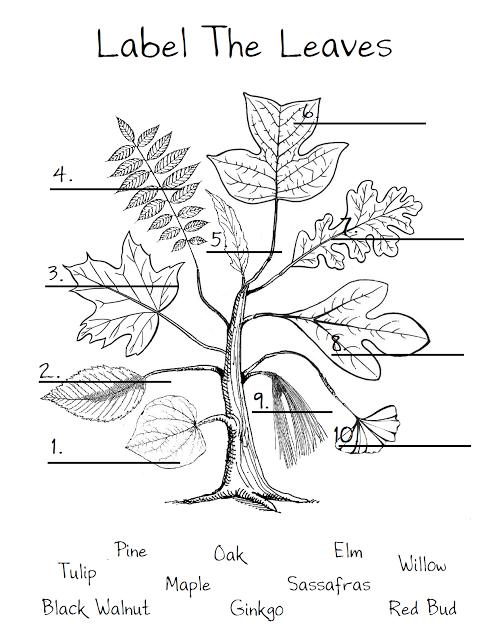 Leaf Worksheetjust To Show The Different Shapes