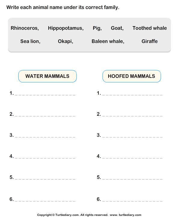 Animals Classification Worksheet
