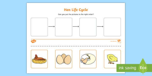 Hen Life Cycle Worksheets