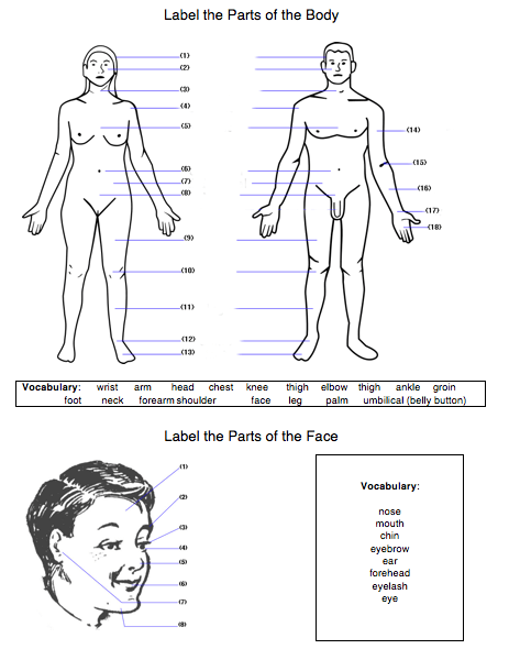 Body Worksheet  Label Body & Face Parts (english Esl Efl)