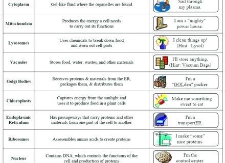 Cell Organelles Worksheet Worksheets On Grade Living Environment
