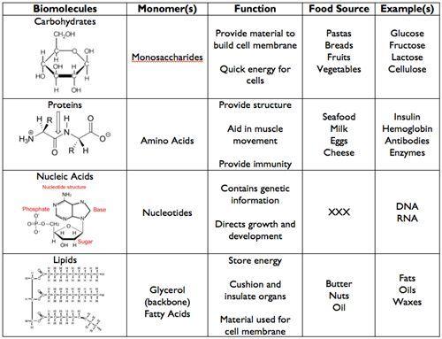 4 Major Biomolecules