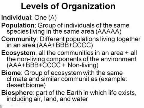 Ecological Organization ( Video )