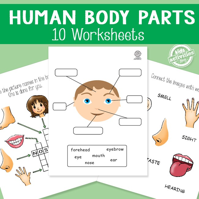Human Body Parts Worksheets For Kids Health Lessons