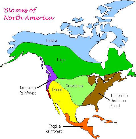 North American Biomes Worksheet Worksheets For All