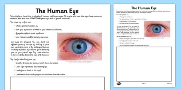 Human Eye Drawing Worksheet   Activity Sheet