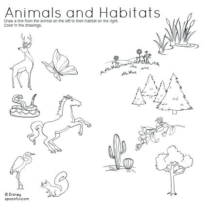 Animal Habitat Worksheets For 4th Grade – Newstalk Info
