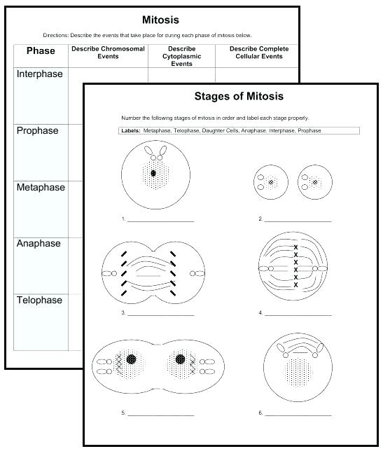 Cells Organelles Worksheet New Downloads 2 Cell Organelle Quizzes