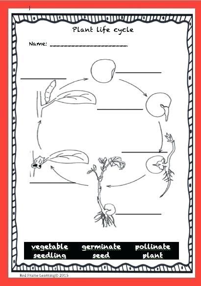 Label The Parts Of A Plant Life Cycle Worksheets 3rd Grade