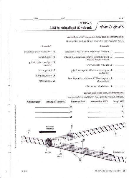 Dna Structure And Replication Worksheet Key Or Pogil Answers With