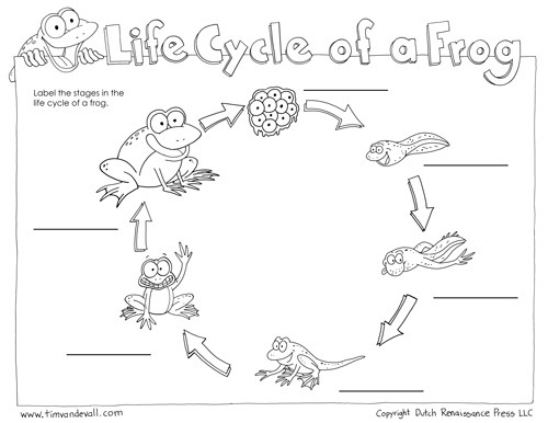Life Cycle Of A Frog Worksheet Cut And Paste