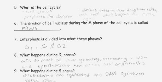Mitosis Worksheet Answers Easy And Fun The Cell Cycle Coloring