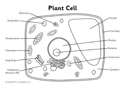 Plant Cell Label Worksheet  18 Worksheet