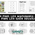 Plant Life Cycle Worksheets 3rd Grade
