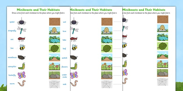 Minibeasts And Their Habitats Worksheet
