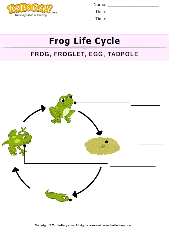 The Life Cycle Of A Frog For Kids Worksheet