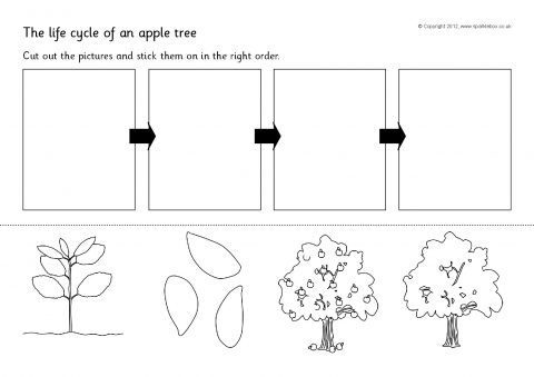 Trees Worksheets Kindergarten Apple Tree Life Cycle And Growth