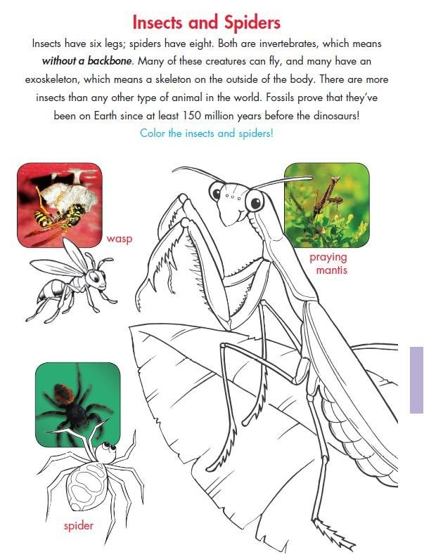 New 154 First Grade Insect Worksheets