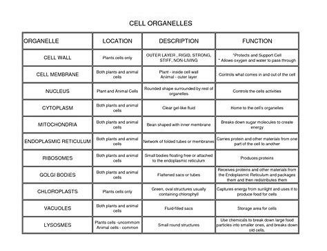 Image Result For Cell Organelles And Their Functions Chart