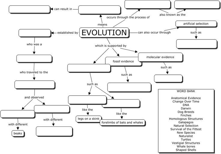 Evolution Concept Map  Great Evoltuion Worksheet