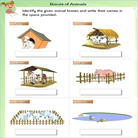 Animals And Their Homes Pictures Worksheets Animals And Their