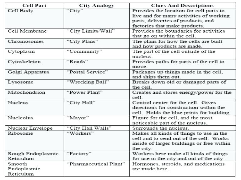 Cell City Analogy Worksheet Animal Cell City Worksheets Analogy