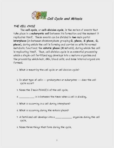 39 Cell Cycle And Mitosis Worksheet Answer Key Graphics