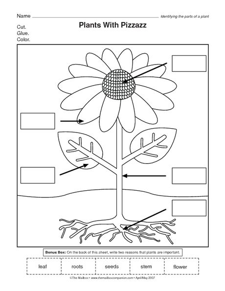 Parts Of A Flower Worksheet  Science