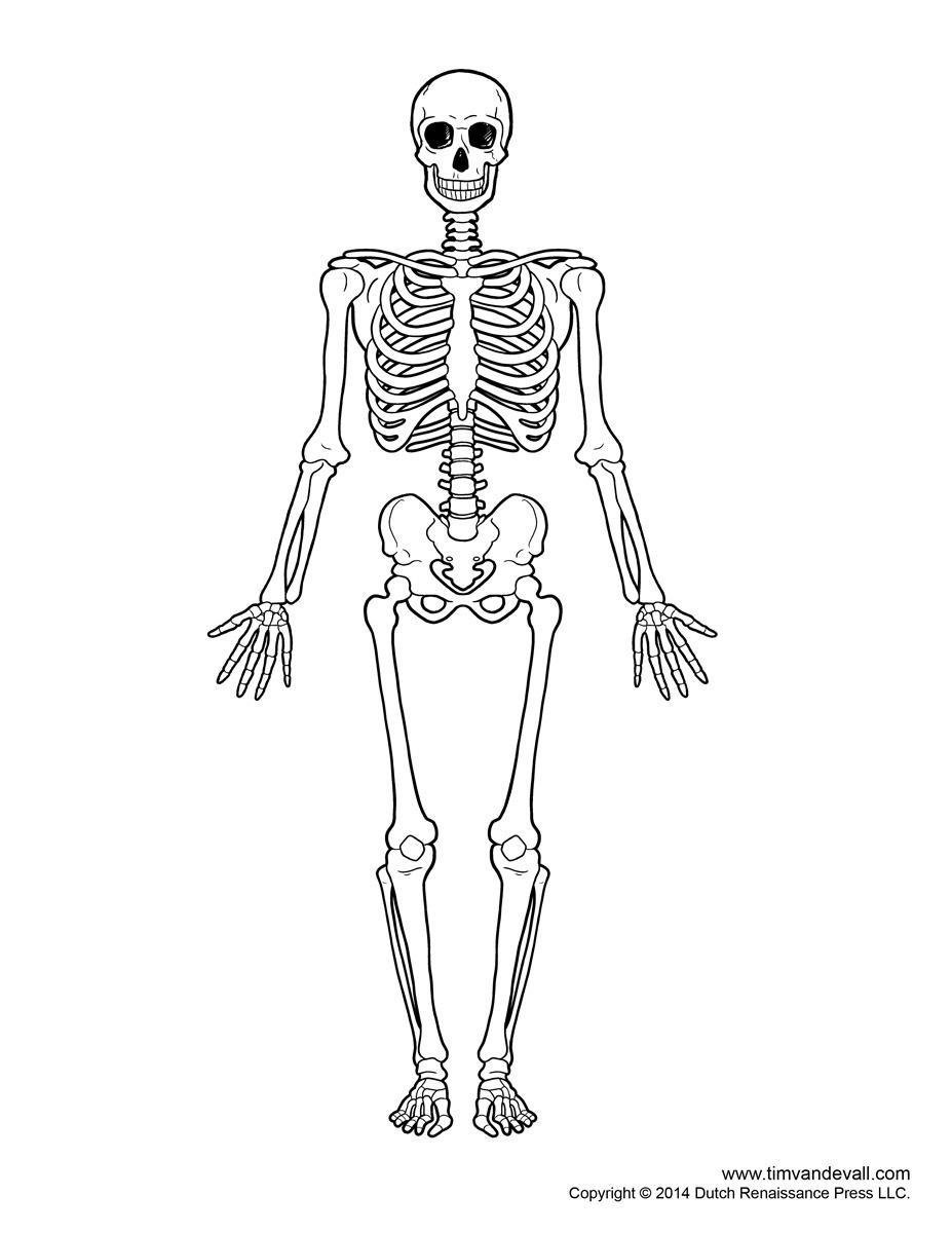 Blank Bone Diagram