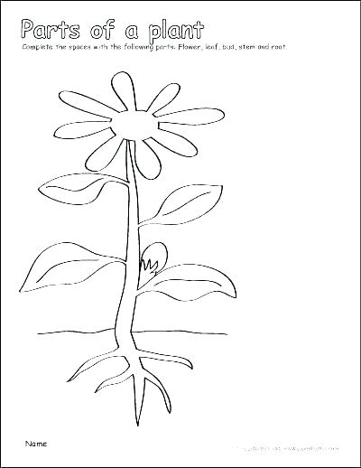 Photosynthesis Coloring Worksheet