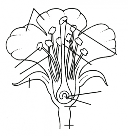 Parts Of Flower    Parts Of Plant    Kindergarten Worksheet Guide