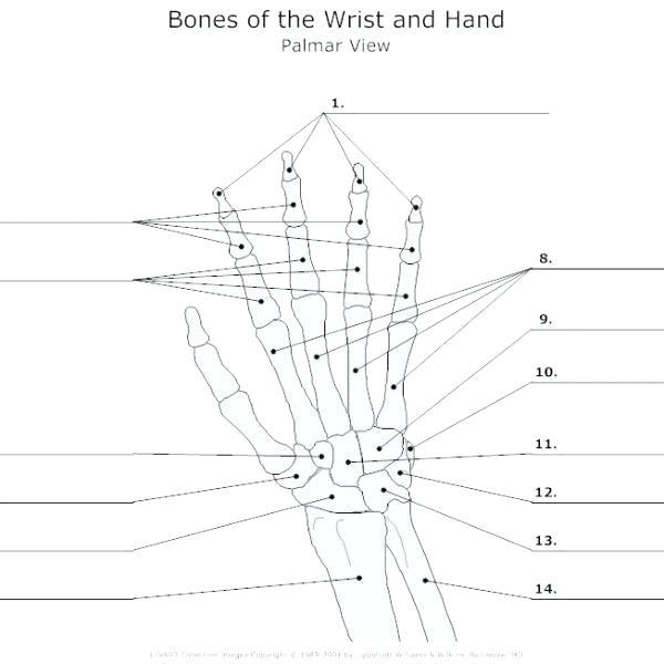 Blank Skeleton Bone Diagram Fishbone Template Word – Rightarrow