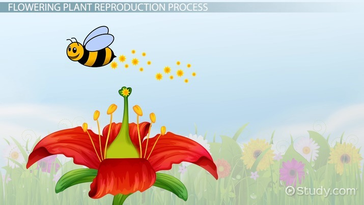 Plant Reproduction Lesson For Kids