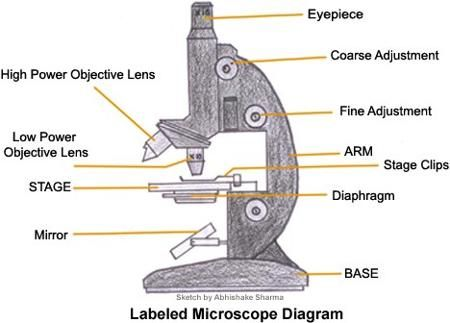 A Study Of The Microscope And Its Functions With A Labeled Diagram