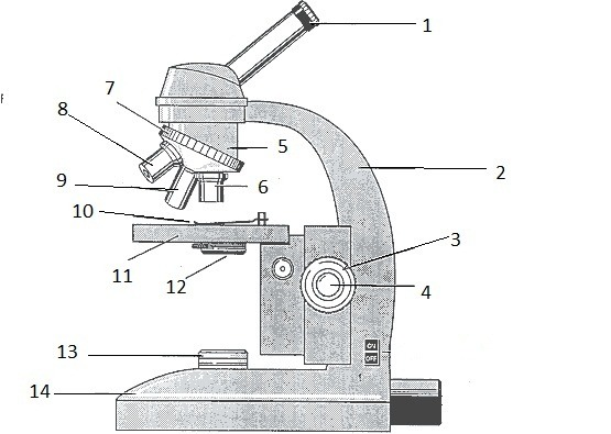 Unlabeled Microscope Diagram Group With 79+ Items
