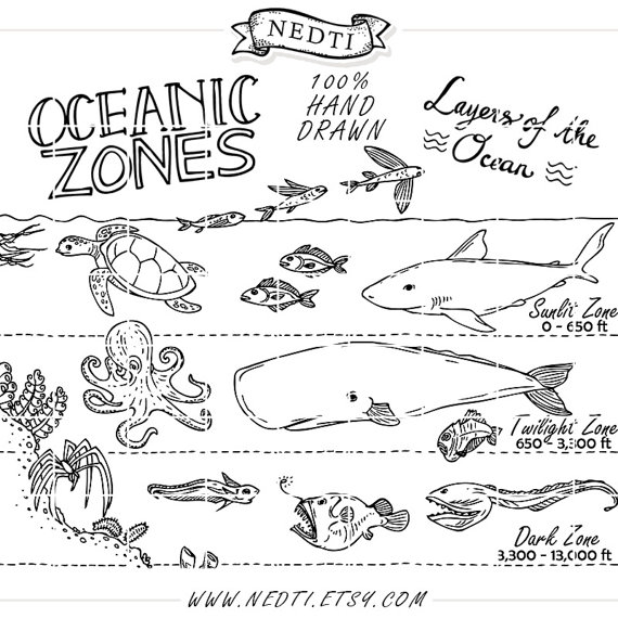 Oceanic Zones Educational Clipart, Earth Science, Hand Drawn